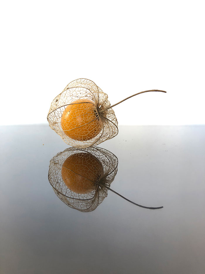 Gooseberry_cage