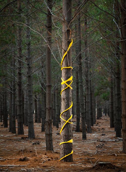 JAN_Yellow-tree