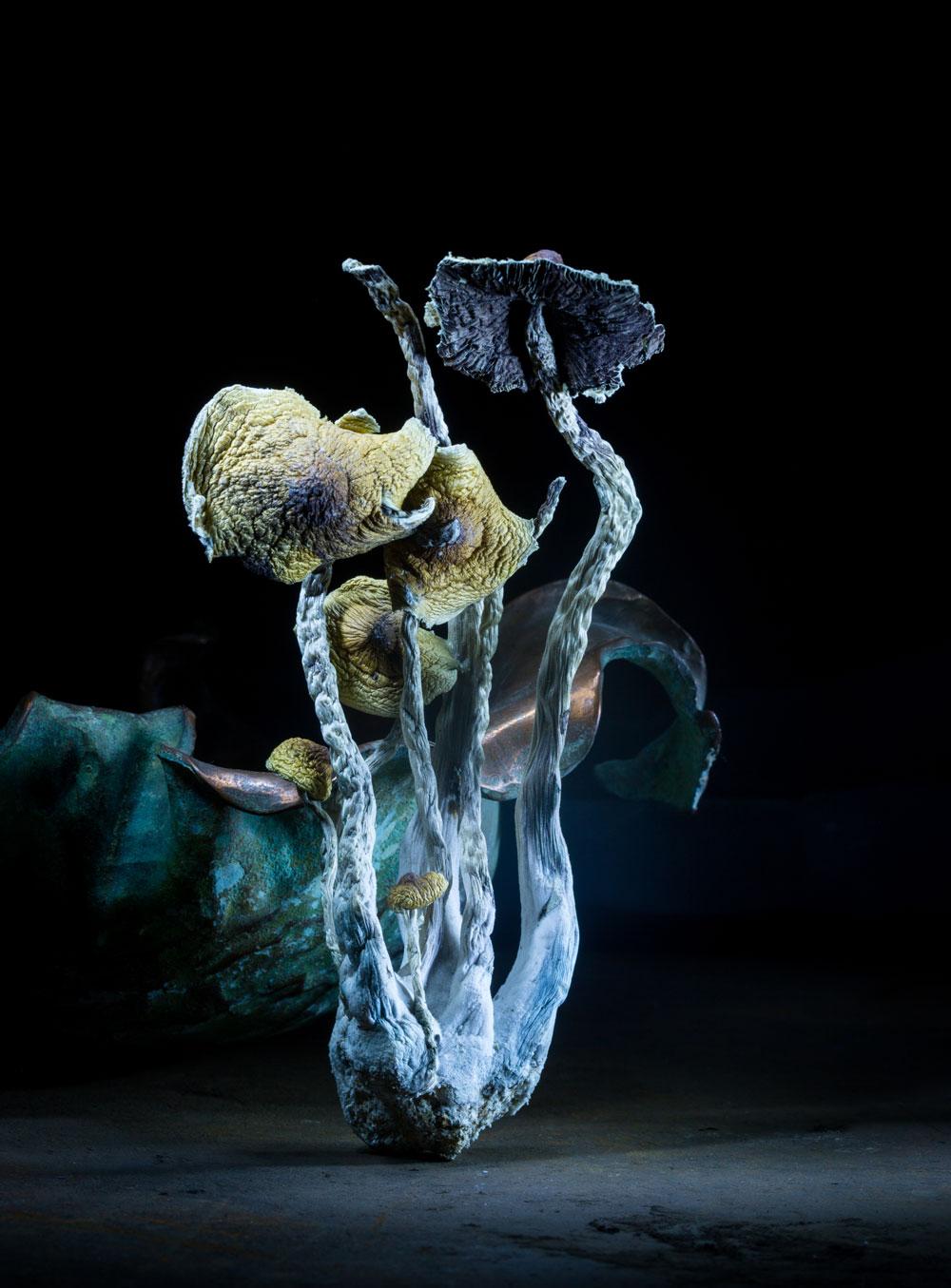 mushrooms-1364